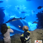 Giveaway: Win family tickets to the SeaLife Aquarium London