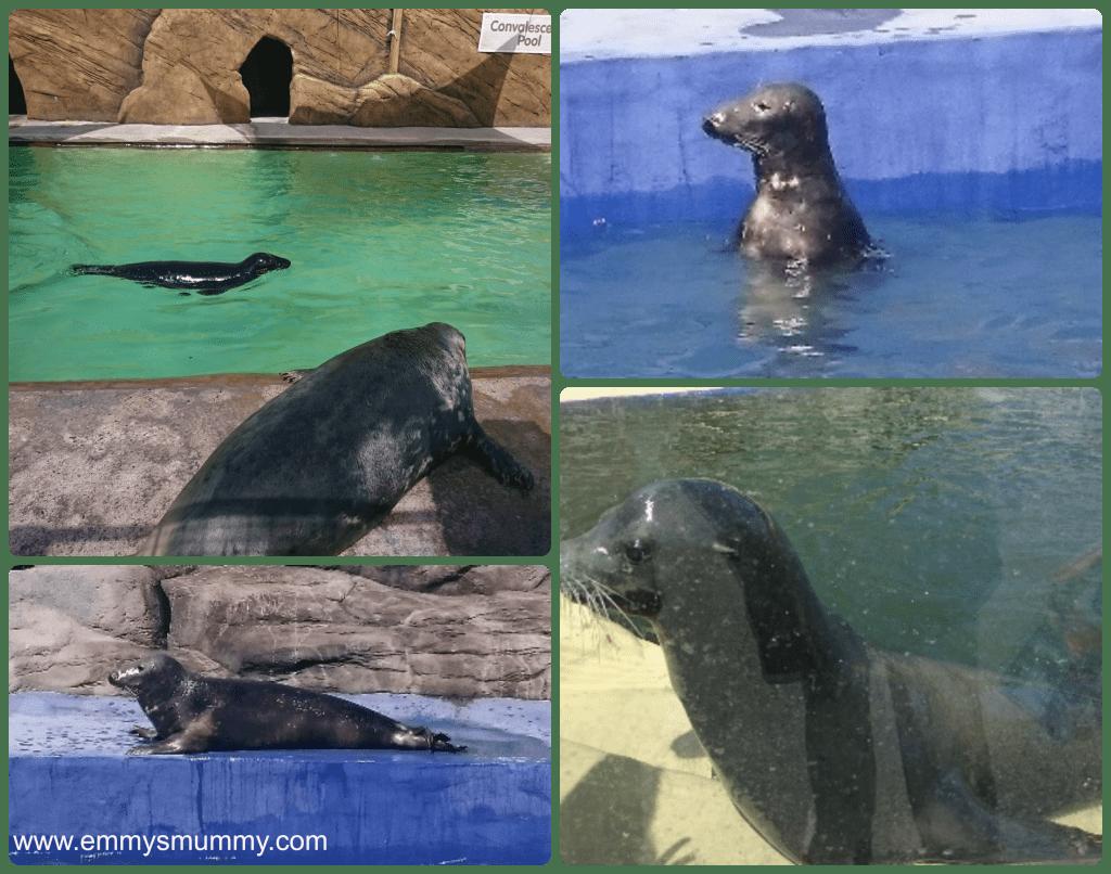 Seals at the cornish seal santuary