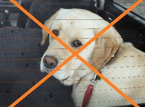 Dangers of dogs in cars