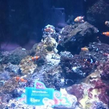 sea life centre 1