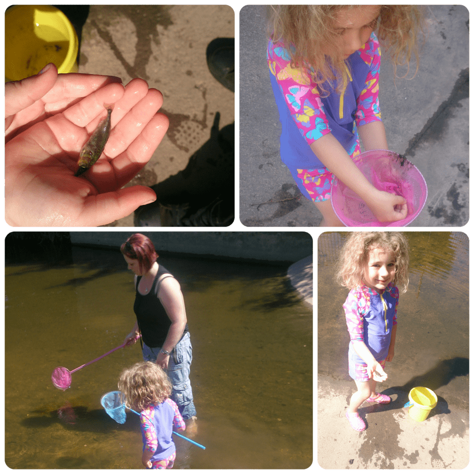 pond-dipping-01