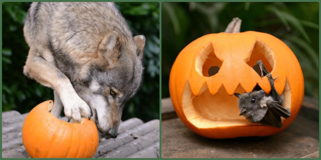 Howl-o-ween fun at Paradise wildlife park