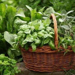 Benefits of gardening with kids