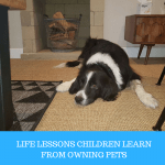 Life lessons children learn from owning pets